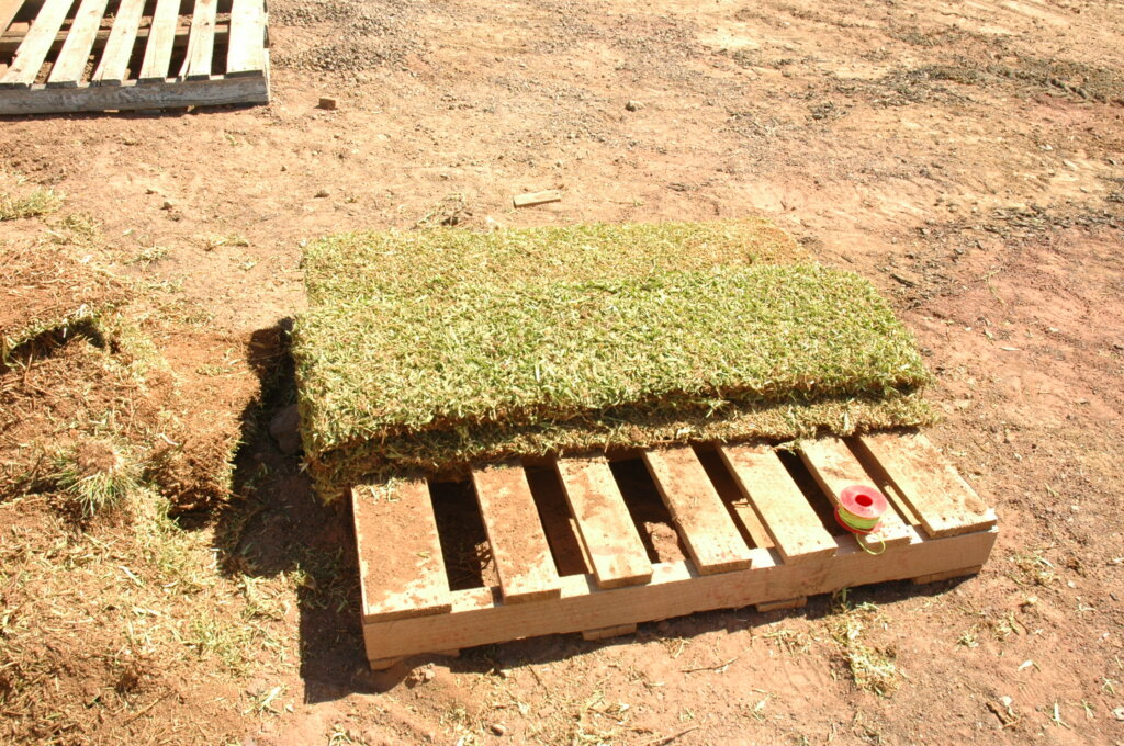 slabs of cut grass